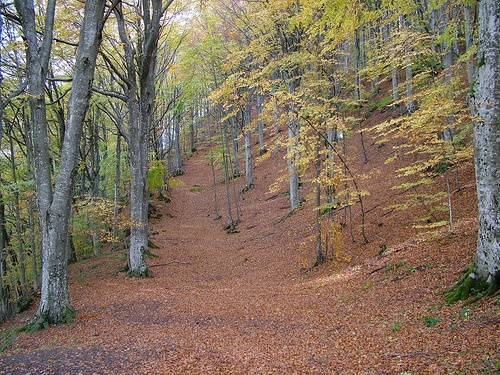 Parque Nacional del Bosque Casentinesi