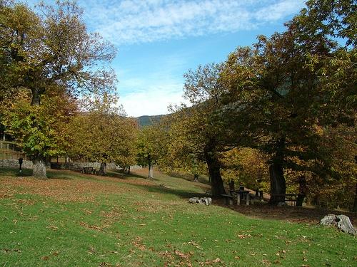 Bosque Casentinesi