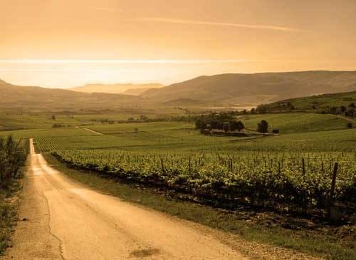 Recorrer Sicilia con sus Rutas del Vino