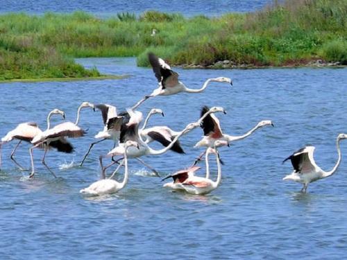 Un día en el Delta del Po, Patrimonio Mundial