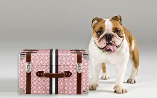 Viajar con mascotas a Italia